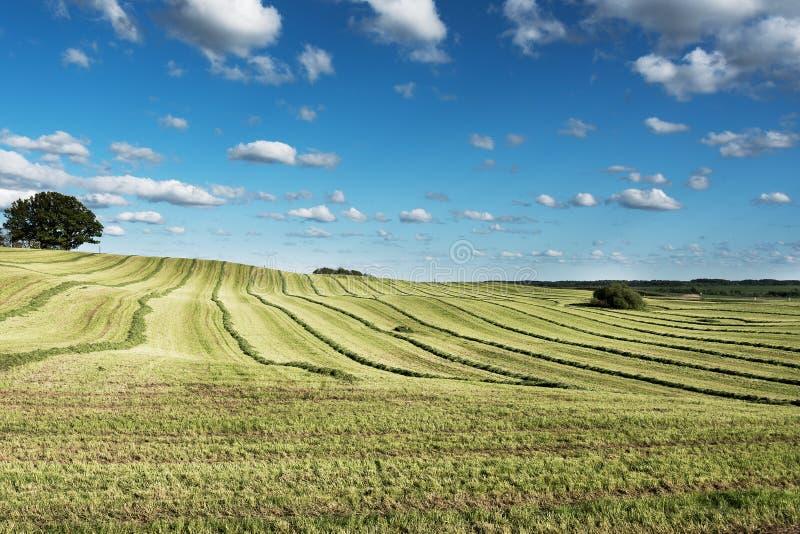 Gräsplan mejat fält arkivbilder