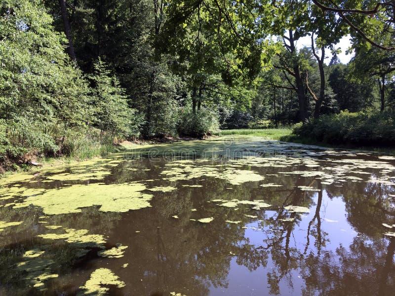 Gräsplan på dammet arkivbilder