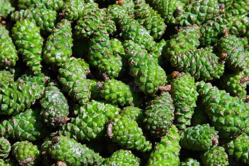 Gräsplan sörjer kottebakgrund Kottar används i växt- medicin royaltyfri bild