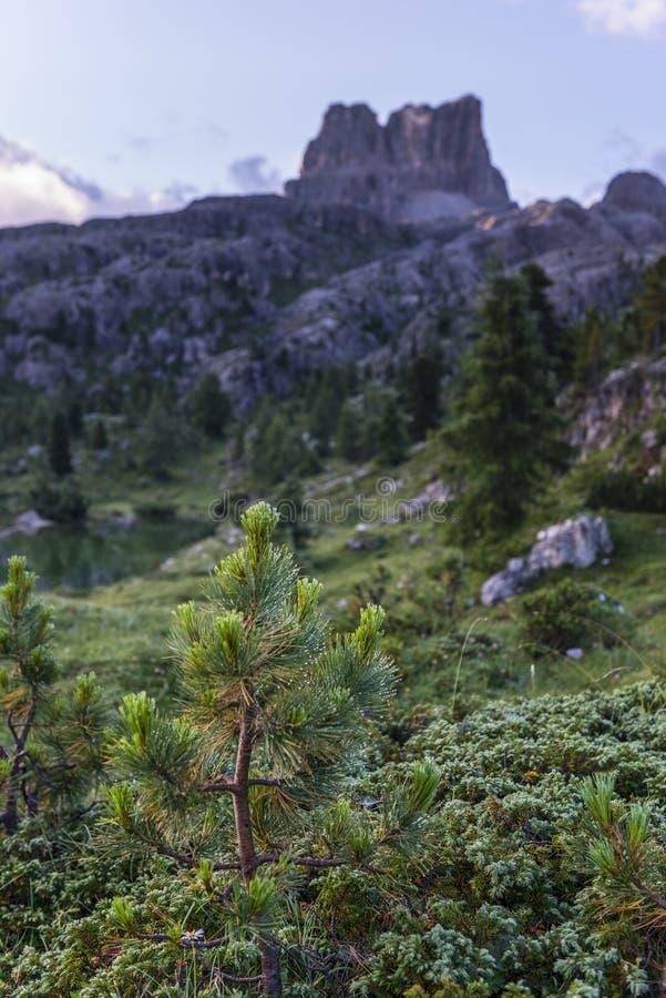 Gräsplan sörjer med monteringen Averau på bakgrunden, det Falzarego passerandet, Dolomites, Italien arkivbilder