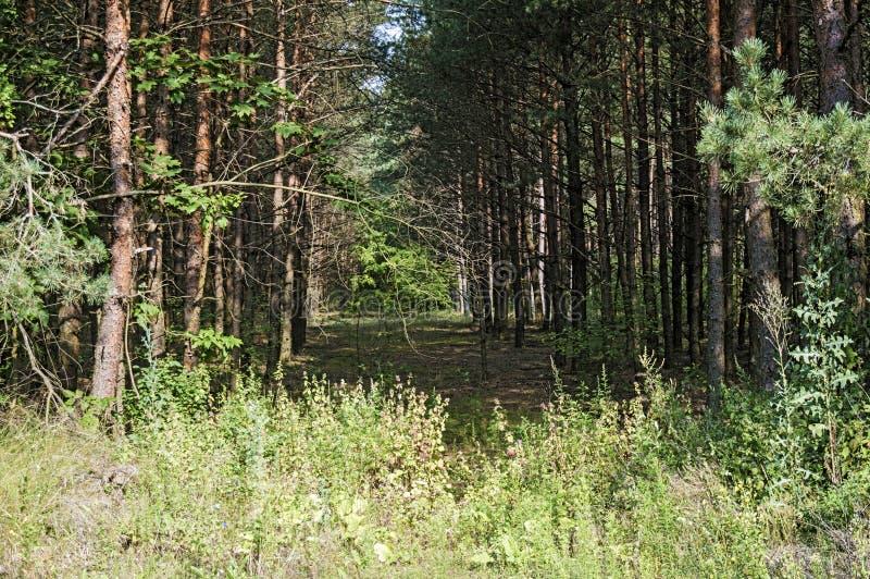 Gräsplan sörjer träd på kanten av arkivbilder