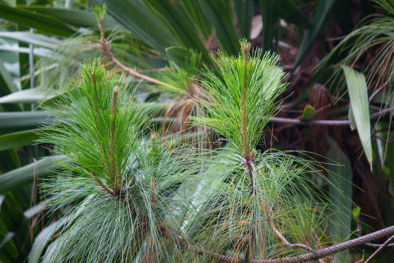 Gräsplan sörjer trädbakgrund med nya knoppar på våren fotografering för bildbyråer