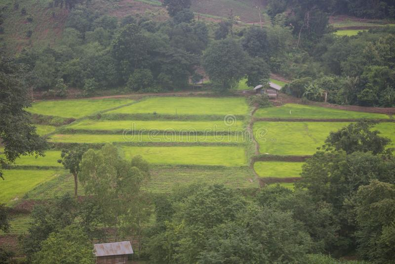Gräsplan terrasserad risfält i Phetchabun, Thailand arkivbilder