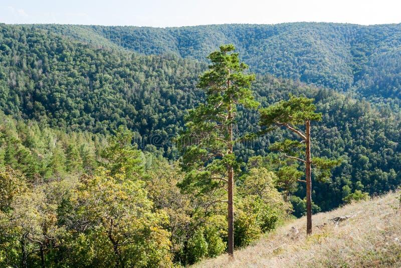 Gräsplan två sörjer träd på backen och de skogsbevuxna bergen i bakgrunden royaltyfria bilder