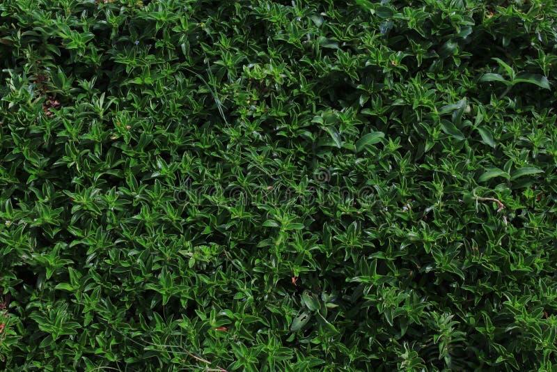 Gräsplan växer i vinteravbrott royaltyfri bild