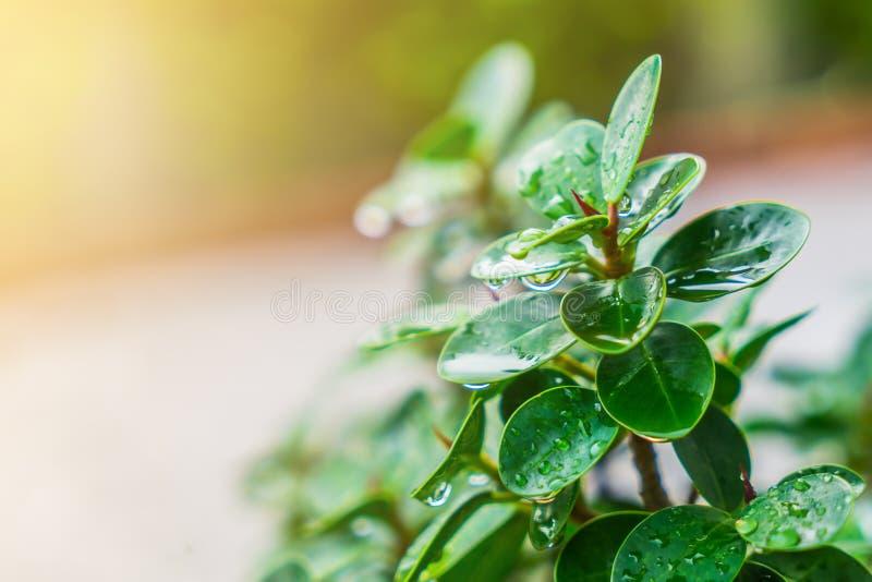 Gräsplanen spricker ut med droppar av vatten efter hällregnbakgrund royaltyfria bilder