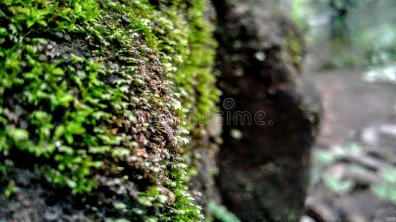 Gräsplanen vaggar laver arkivbilder