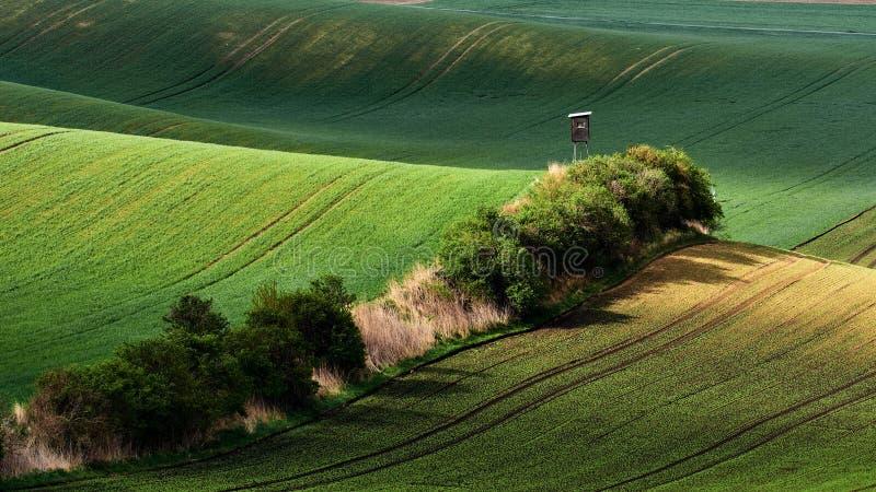 Gräsplanfält i aftonen i södra Moravia, Tjeckien Vinkar kullar med grönt gräs som rullar fält Härliga höstländer royaltyfria bilder