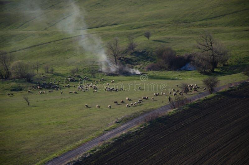 Gräsplanfält och sheeps i Transilvania royaltyfria foton
