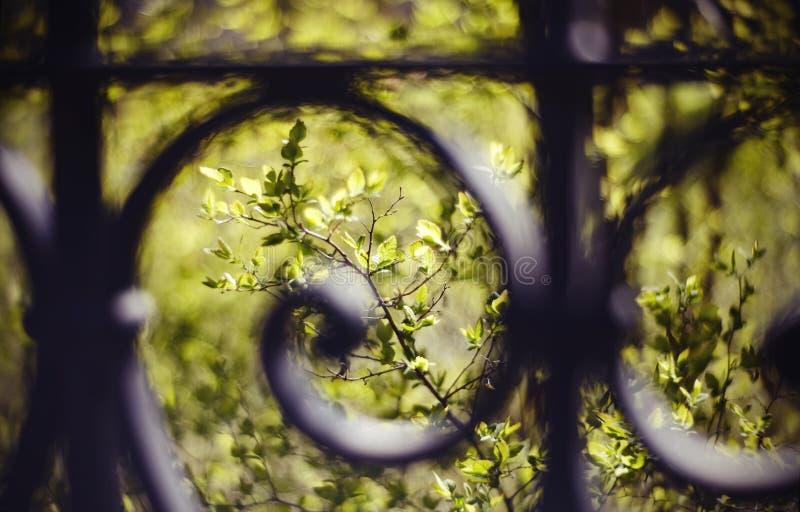 Gräsplanfilialer av buskar och träd bak ett skott staket arkivfoto