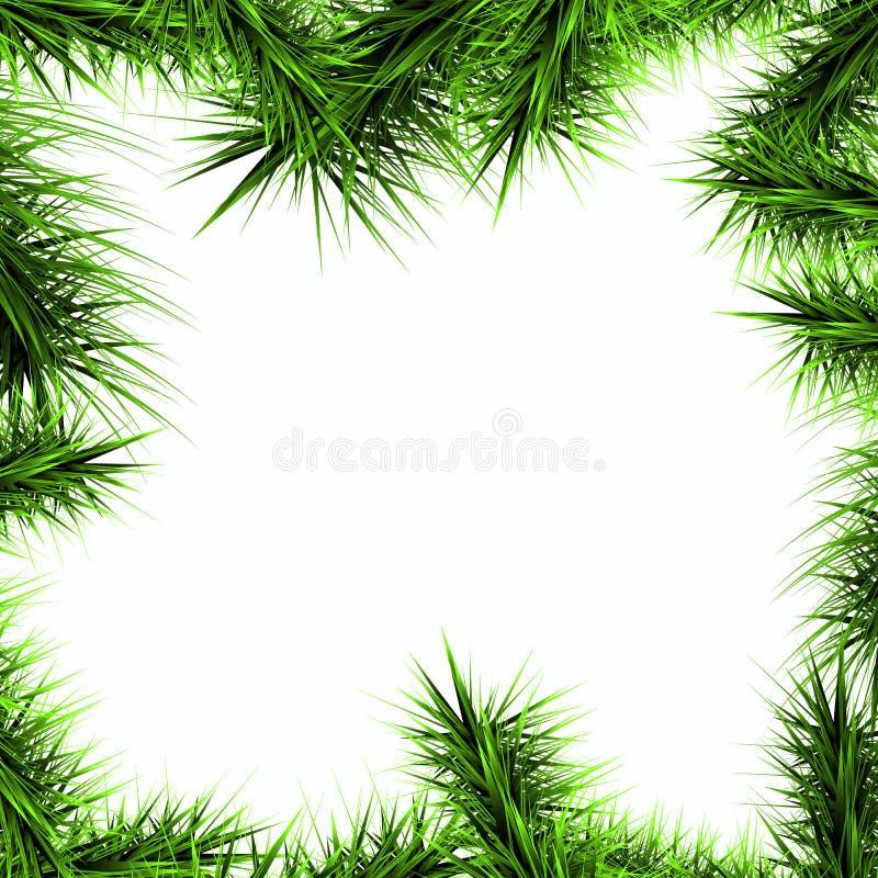 Gräsplanfilialer av en julgran på en vit backgroun arkivbilder