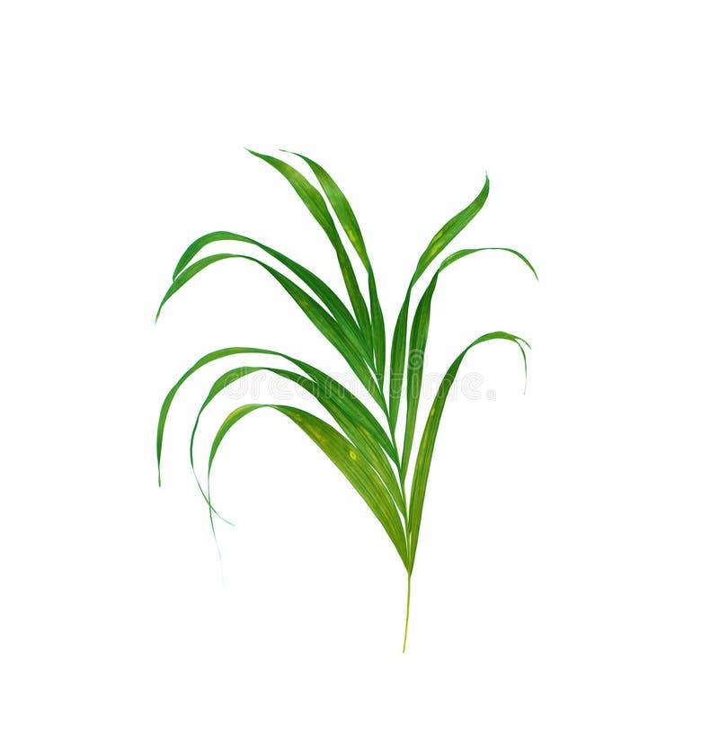 Gräsplansidor av palmträdet arkivfoton