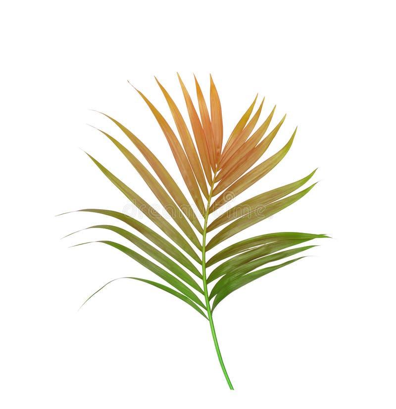 Gräsplansidor av palmträdet arkivbilder