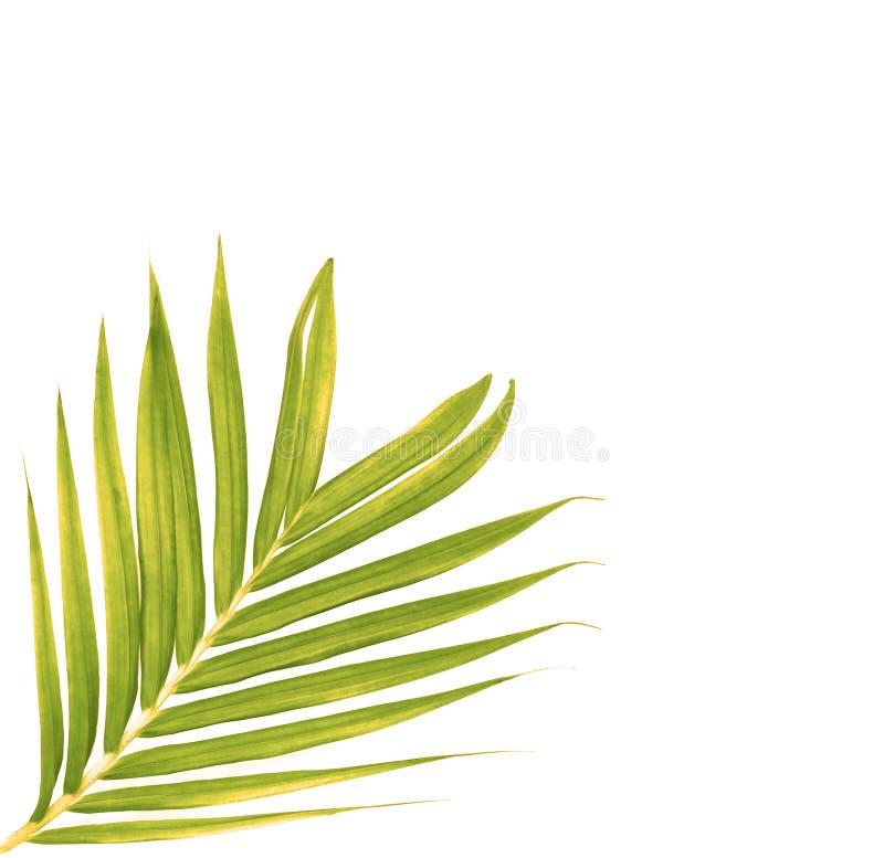 Gräsplansidor av palmträdet arkivfoto