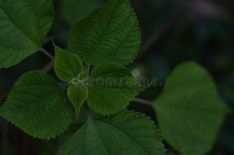 Gräsplansidor av växter royaltyfri fotografi
