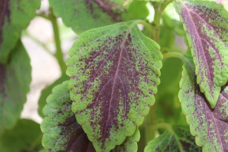 Gräsplansidor med purpurfärgad skugga arkivbilder