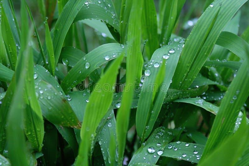 Gräsplansidor med små vattendroppar arkivfoto