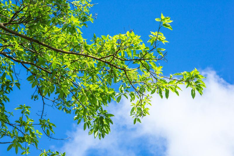 Gräsplansidor mot bakgrund för blå himmel och molnnatur, arkivfoton