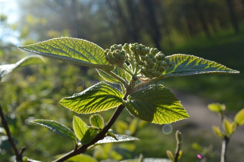 Gräsplansidor och knoppar av buskeblommor glöder i solen royaltyfria foton