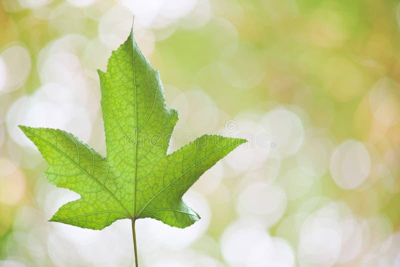 Gräsplansidor på de gröna bakgrunderna royaltyfria bilder