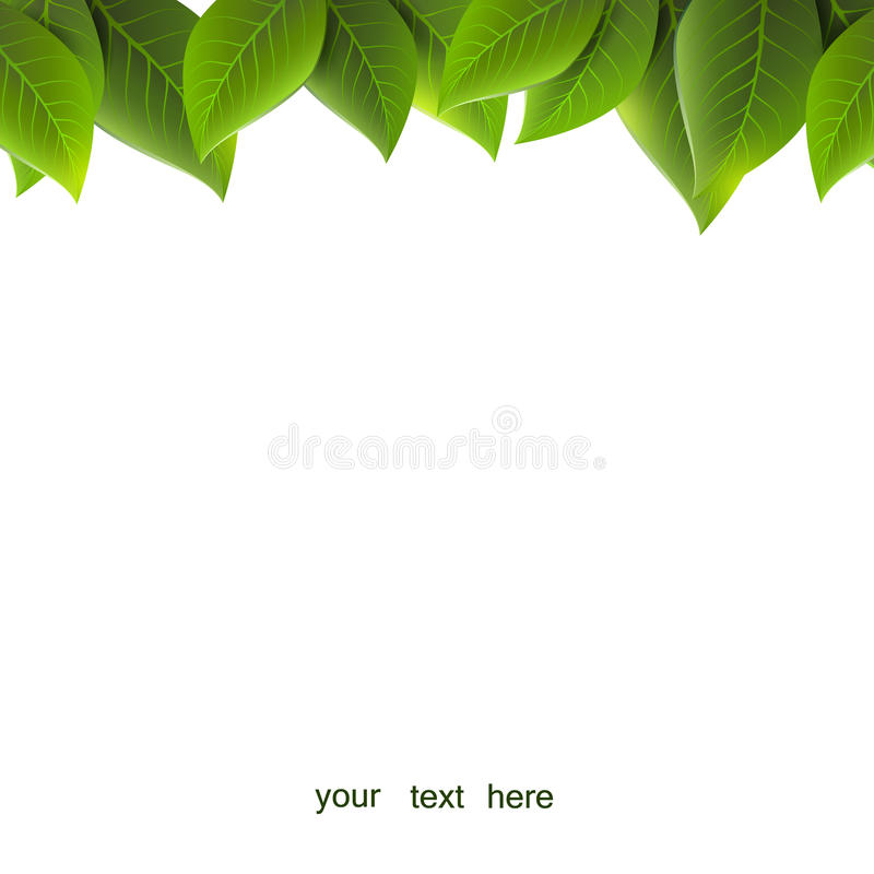 Gräsplansidor på en vit bakgrund, arkivbild