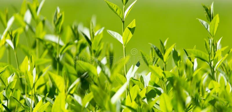 Gräsplansidor på växten royaltyfri bild