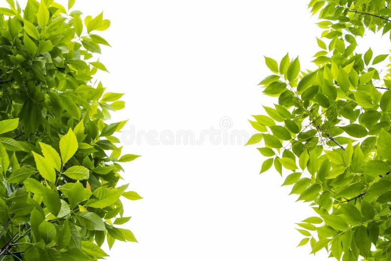 Gräsplansidor på vit backgrondtextur royaltyfria foton