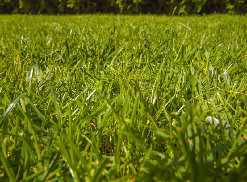 Gräsplansnittgräs i vår royaltyfria bilder