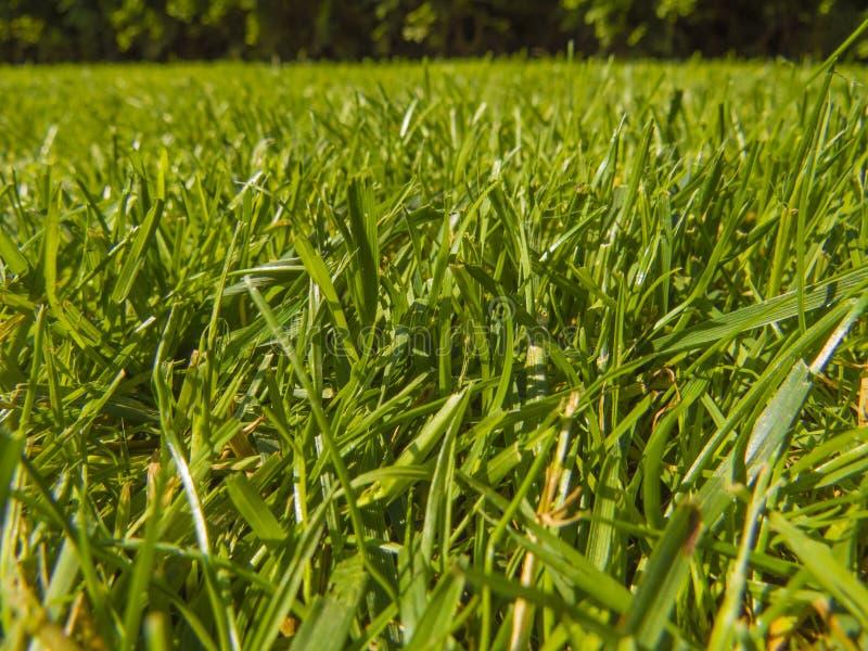 Gräsplansnittgräs i vår royaltyfri bild