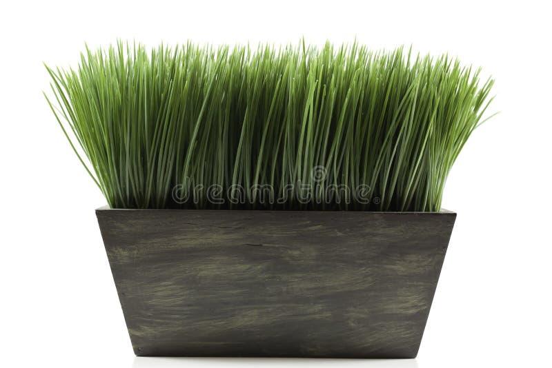 gräsplanter arkivbilder