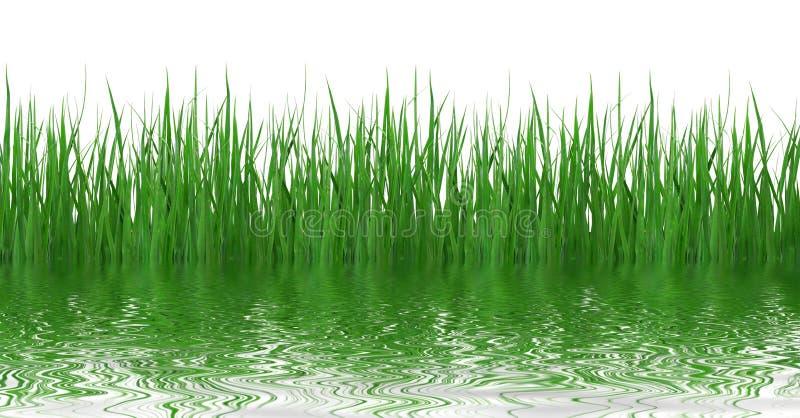 gräsreflexionsvatten royaltyfri bild