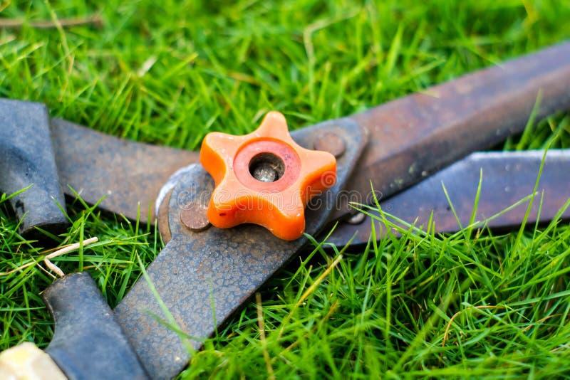 Grässax fotografering för bildbyråer