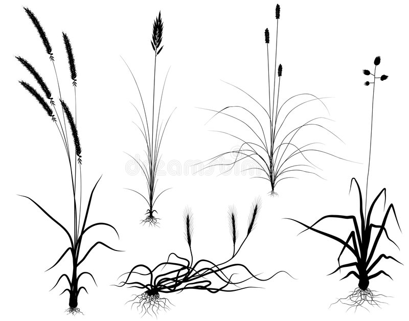 grässilhouettes stock illustrationer
