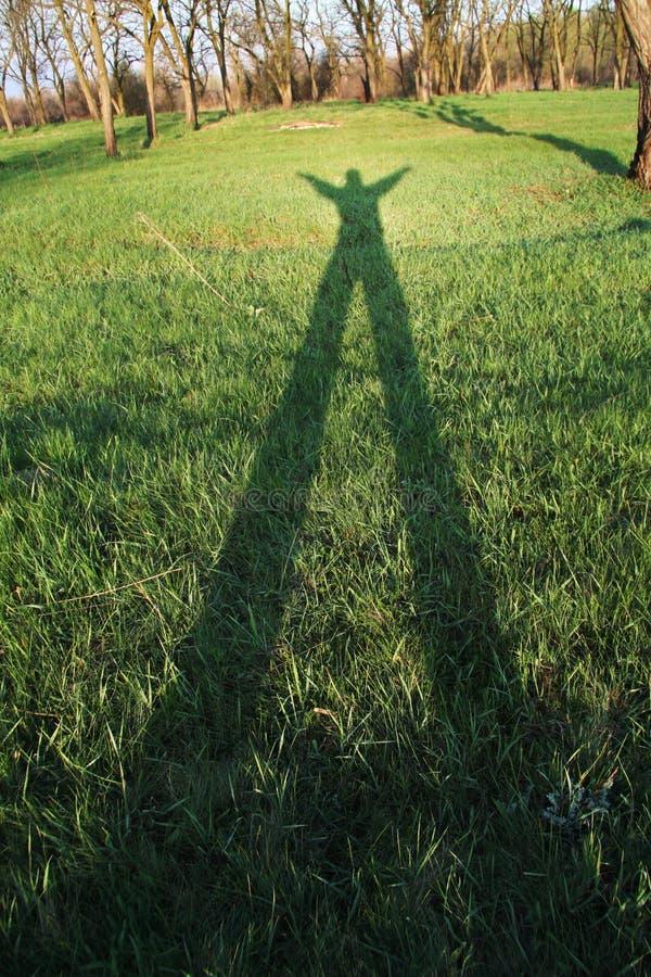 grässkugga arkivfoton