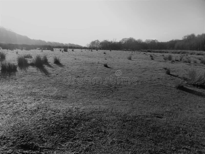 Grässlätt på den Rivington piken, Lancashire royaltyfri fotografi