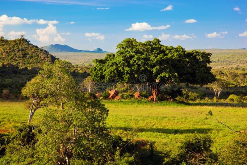 Grässlätten, busken och savannaen landskap. Västra Tsavo, Kenya, Afrika arkivfoto