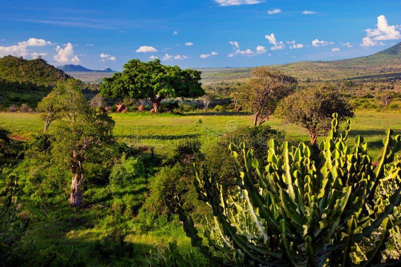 Grässlätten, busken och savannaen landskap. Västra Tsavo, Kenya, Afrika arkivfoton