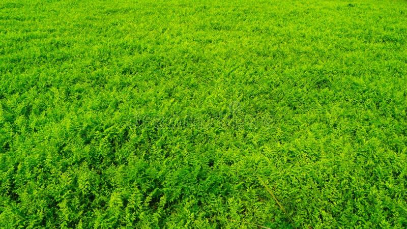 Grässlätten i gräsplan royaltyfria bilder