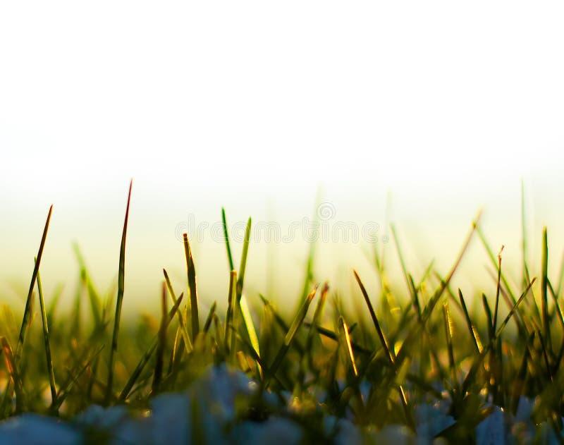 grässnow arkivbilder
