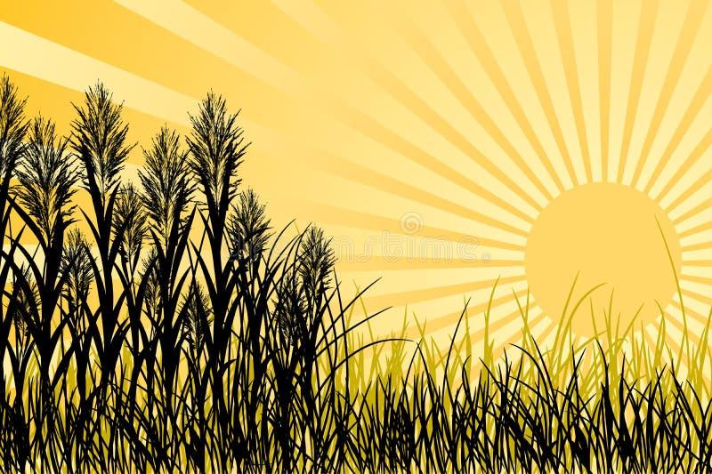 grässolnedgångvektor vektor illustrationer