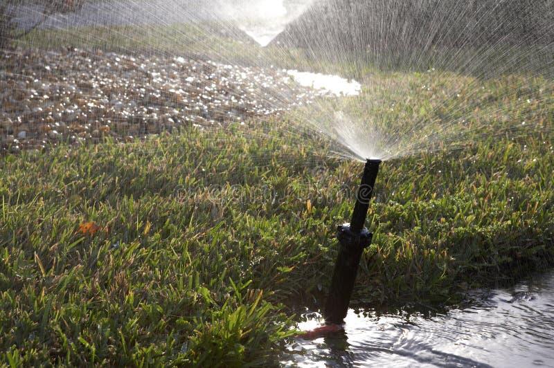 grässprinklervatten royaltyfri bild