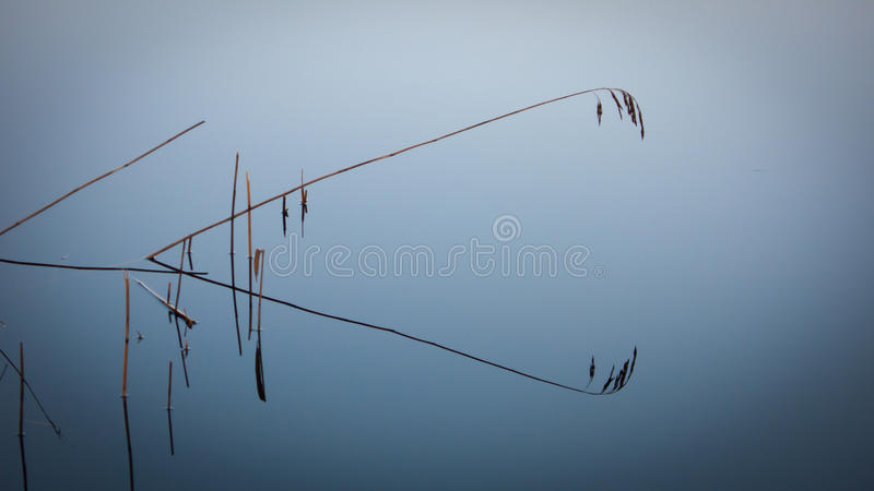 Grässugrör i den blåa sjön royaltyfria foton