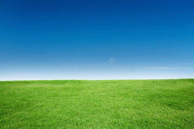 Grästextur med mellanrumet Copyspace mot blå himmel arkivfoto