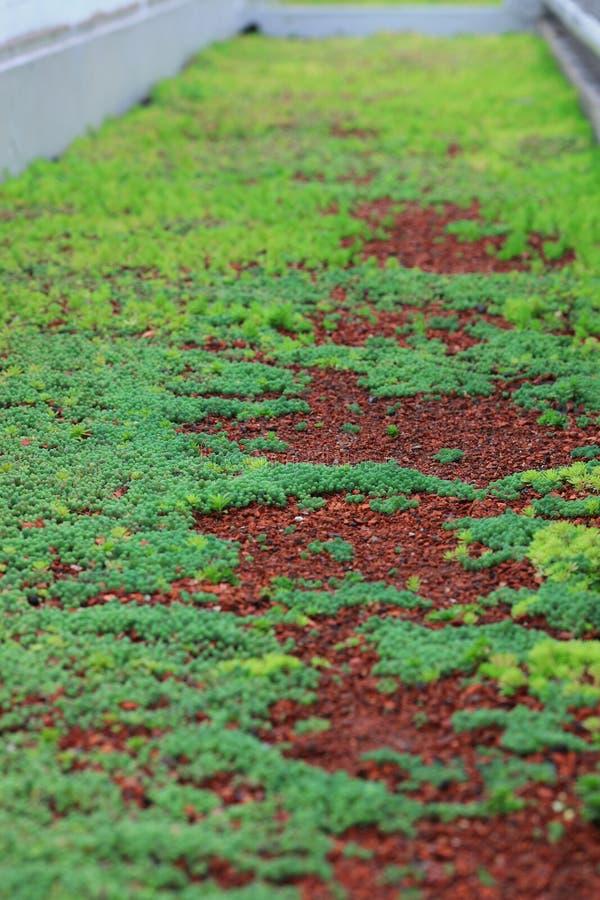 gräsväg royaltyfri fotografi