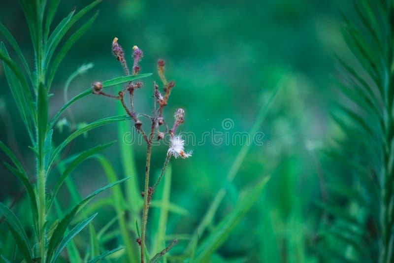 Gräsväxter, grön bakgrund, växtsidor, bladåder och texturer, naturligt landskap, sommar arkivfoto