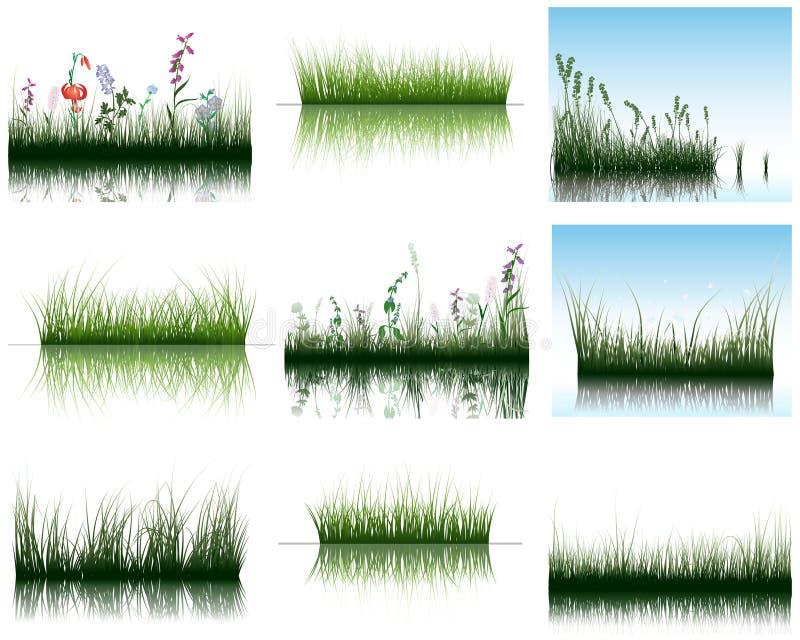 gräsvatten vektor illustrationer
