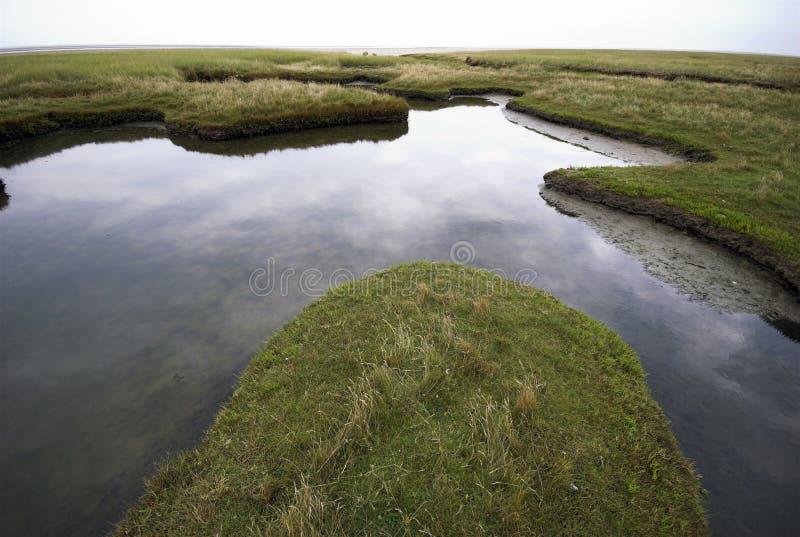gräsvatten arkivfoton
