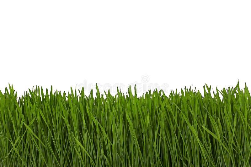 gräsvete arkivfoto