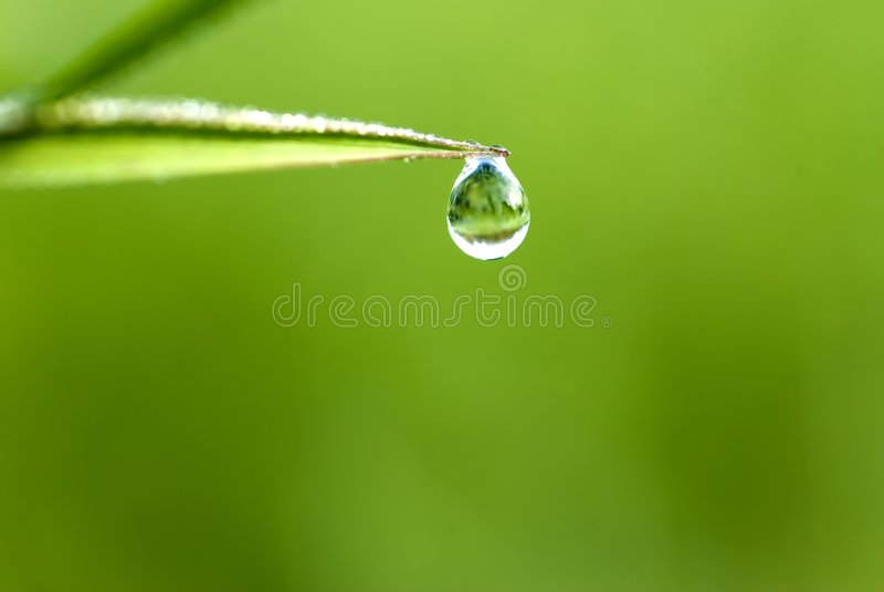 Gräswaterdrop Royaltyfri Fotografi