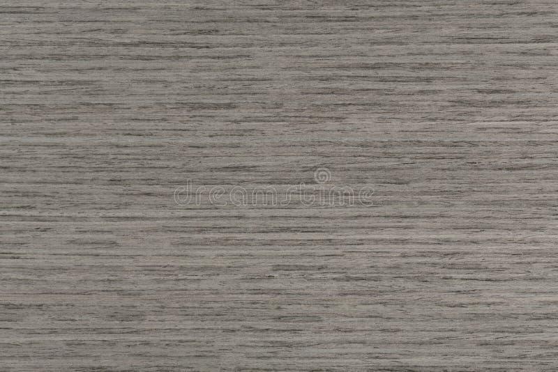 Grå ektextur för artikel med ensamrätt på makro Closeup för naturlig bakgrund royaltyfri foto